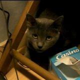 Témoignage : une comportementaliste du chat nous raconte sa plus belle victoire