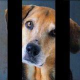 30 Millions d'amis : non aux abandons d'animaux ! (Vidéo du jour)