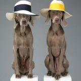 Quand des chiens deviennent des tops modèles (Photos et vidéo)