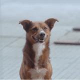 Une bouleversante campagne met en scène la loyauté sans bornes des chiens