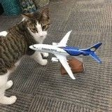 Un chat sauvé, pris en charge par une compagnie aérienne canadienne