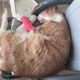 Un chaton torturé pour un différend entre voisin ? Sa famille réclame justice