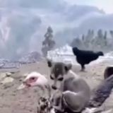 Ce chiot a décidé de se coucher sur un canard pour faire la sieste ! (vidéo)