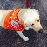 Courir pour aider les chiens : la 3ème édition de la cani-course de la SPA en images !