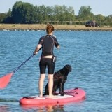 Le cani-paddle : comment pratiquer le sport de l'été avec son chien ?