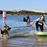 Cani-triathlon : un événement couronné de succès pour les passionnés de sport et de chiens !