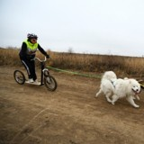 Comment faire de la trottinette avec son chien ? Le guide ultime de la cani-trottinette !