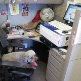 Un chien fait passer des entretiens d'embauche !