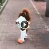 Ce chien déguisé en écolier qui marche sur deux pattes affole le Web !