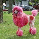 Coloration canine : la nouvelle tendance