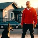 Canine Academy : que vaut la nouvelle série Netflix consacrée à l'éducation canine ?