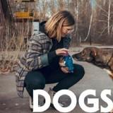 « Dogs of Tchernobyl » : que sont devenus les chiens de Tchernobyl ?