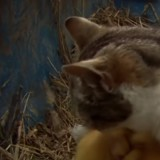 Ils pensent que leur chat a mangé les canetons : mais il a un secret complètement différent !