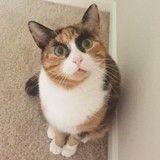Sosie de Cara Delevingne, ce chat s'est emparé du Web avec ses drôles de sourcils