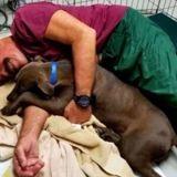 Ce refuge cherche des volontaires pour passer des journées entières à caresser des chiens !