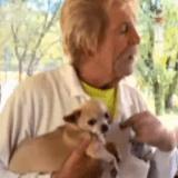 Du haut de ses 73 ans, il sauve son chien des griffes d'un ours