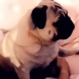 Très connue en France, elle abandonne son chien et choque tout le monde avec son message