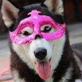 Mardi Gras : 14 chiens prêts pour le Carnaval !