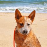 Des secouristes viennent en aide aux chiens sur les plages d'Italie