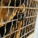 Carrefour retire la viande de chien de ses rayons en Chine