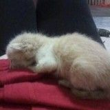 Sauvetage : emprisonnés sous un sol carrelé, quatre chatons ont été épargnés in extremis