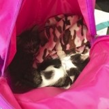 Rentrée des classes : cette fillette a osé cacher ses chats dans son cartable !