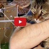 Fan de son chat, il lui construit le plus cool des châteaux forts ! (Vidéo du jour)