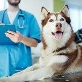 Votre chien a des problèmes de comportement ? Pensez à la castration !