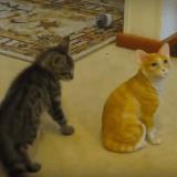 Quand un chat veut jouer avec un faux chat… (Vidéo du jour)