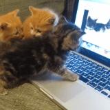 Quand des chatons découvrent l'informatique (Vidéo du jour)