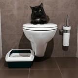 Et si votre salle de bain était la litière de votre chat ?