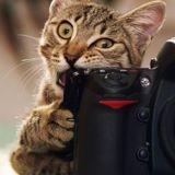 Selon une étude, les propriétaires de chats prennent en moyenne 7 photos de leurs animaux par jour !