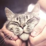 Tout le monde devrait lire cette Déclaration Internationale des Responsabilités envers les chats