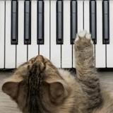 Les effets bénéfiques de la musique sur votre chat