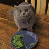 Le chat qui ne voulait pas finir son assiette (Vidéo du jour)