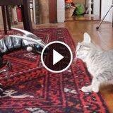 Jurassic Cat : quand un chat découvre un robot dinosaure (Vidéo du jour)