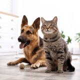 Chiens et chats : leurs prénoms suivraient aussi les modes !