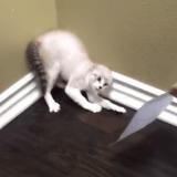 Le chat qui avait peur de son portrait… (Vidéo du jour)