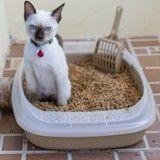 Litière du chat: comment limiter les mauvaises odeurs?