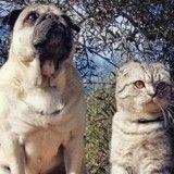 Voici Luigi et Bandito, le chat et le chien globe-trotteurs