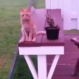 Quand un chat s'assoit comme un humain… (Vidéo du jour)