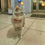 Au Japon, les chats ont leur propre Google Street View !