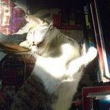 15 chats prêts à tout pour profiter d'un rayon de soleil (un peu comme nous)