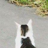 Le pelage de ce chat présente une illusion d'optique incroyable (Photo)