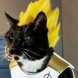 Créatif, il fabrique des cosplay à l'effigie de héros de la pop culture pour ses chats