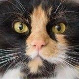 4 histoires bouleversantes qui prouvent que les chats sont des êtres extraordinaires !