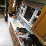 La vie quotidienne de chats de refuge ? Elle ressemble à ça ! (Vidéo du jour)