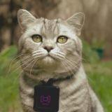 Avec Catstacam, les chats peuvent enfin publier eux-mêmes leurs photos sur Instagram