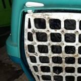 Maison de l'horreur pour 11 chats : les bénévoles descendent à la cave et sont pétrifiés par ce qu'ils voient