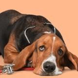 Flower Pawer : du CBD pour chien et chat pour un « mieux-être » au quotidien